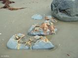 calcite in boulders