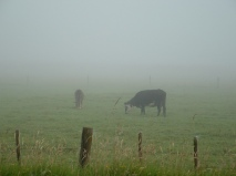damp grazing