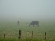 damp grazing