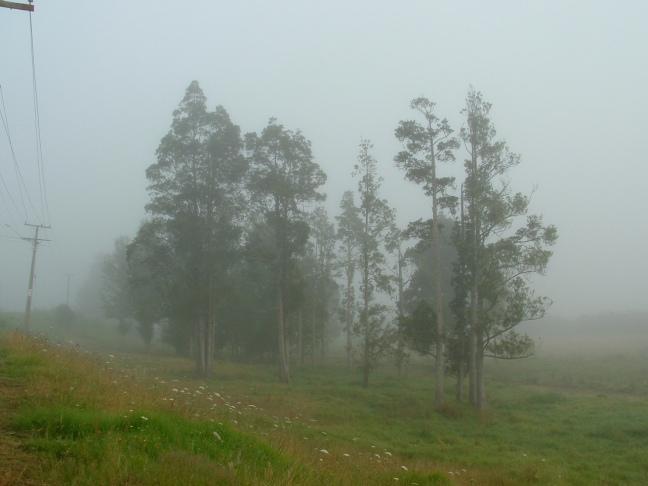 green mists