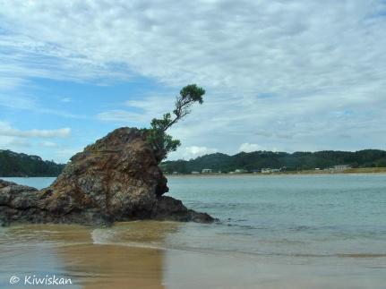 lone tree rock
