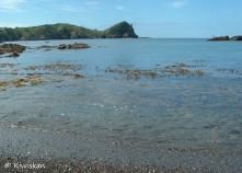 sea wrack