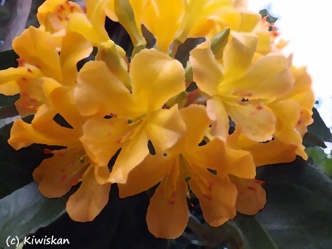 Queens bouquet