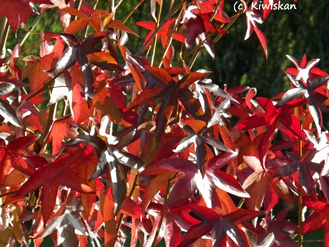autumn leaf patterns2