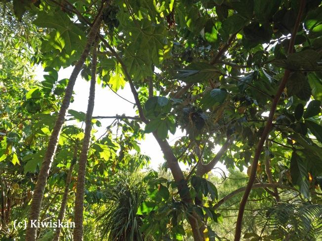 summer canopy2