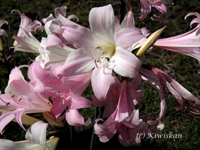 watercolour lilies