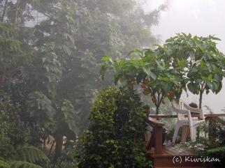 autumn mist2