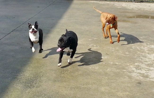 Bert at dogzone2