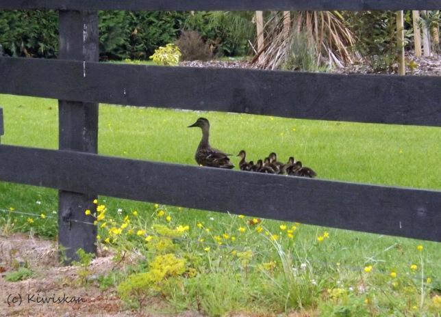 love a duck