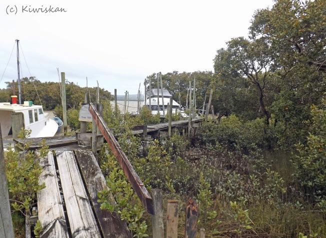 among the mangroves3