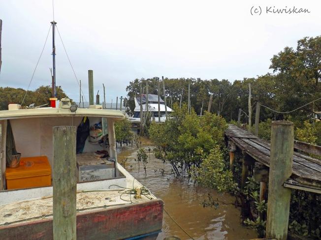 among the mangroves5