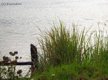 summer river2