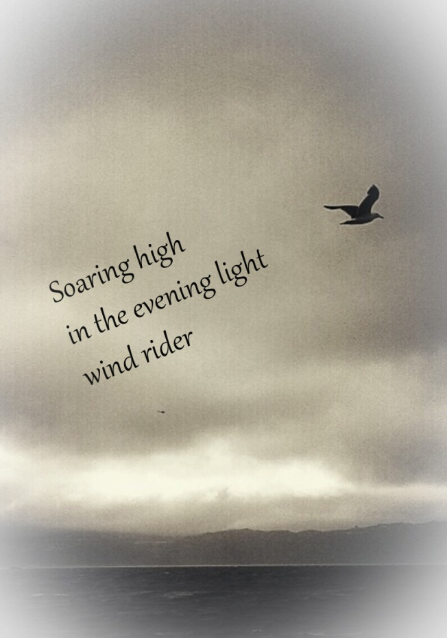 grey day soaring