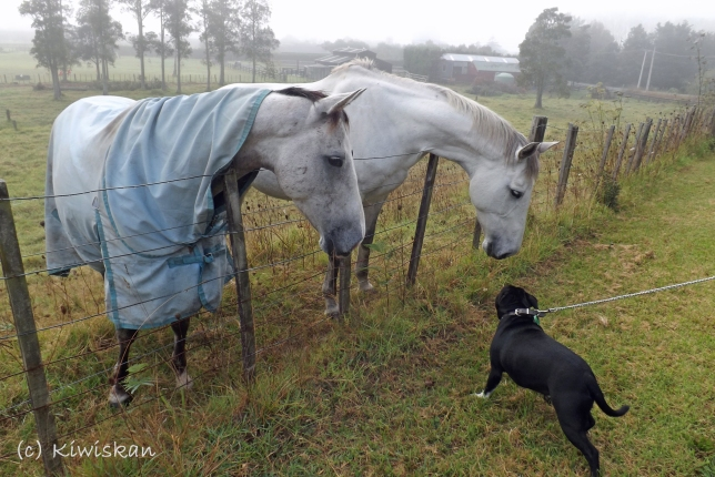 the meeting2