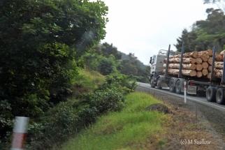 road to Kaikohe4