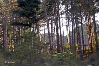 road to Kaikohe5