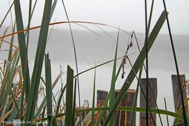 through the ricegrass