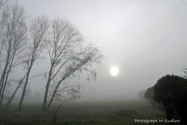 winter morning3