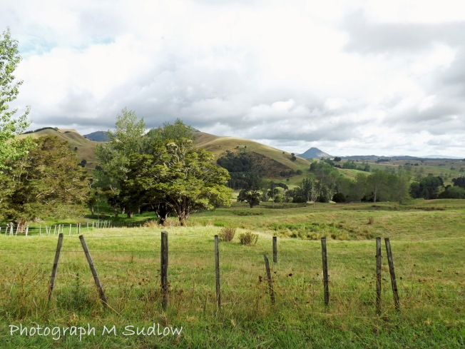 hill pastures2