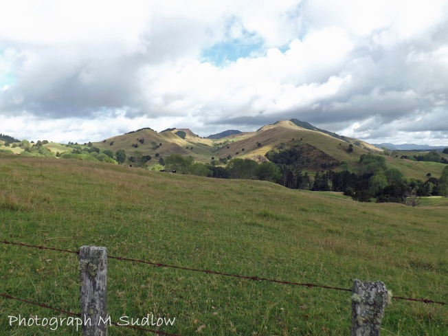 hill pastures3