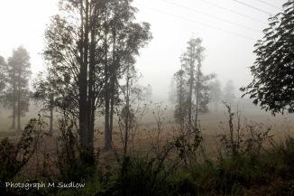 a winter walk3