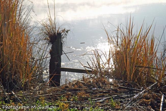 Northern Wairoa