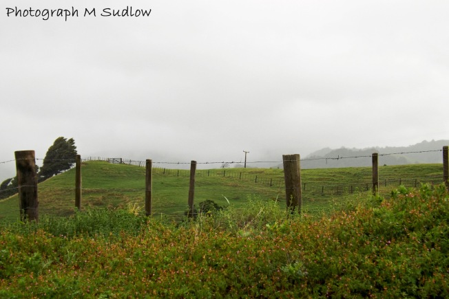 wet weather2
