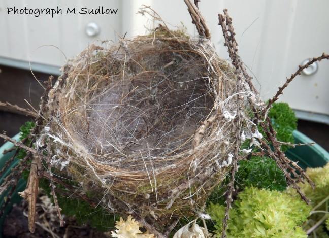 Chaffinch nest