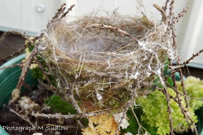 Chaffinch nest2