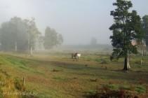 morning mist summer2