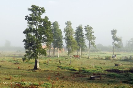 morning mist summer3