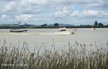 Waitangi boat race2