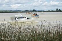 Waitangi boat race3