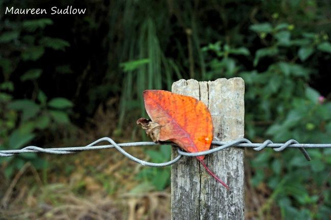 autumn colour2