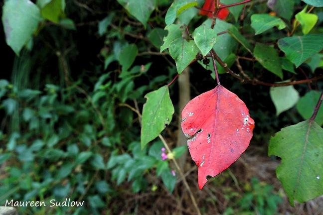 autumn colour3