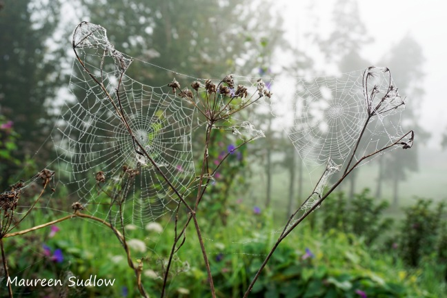 mist and spiderwebs