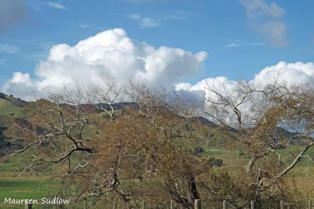 sunlit hills5