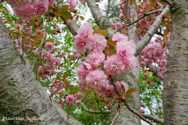 earth-flowering1