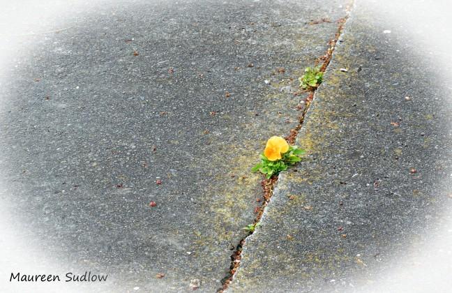 earth-flowering2