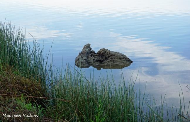 blue-day-driftwood