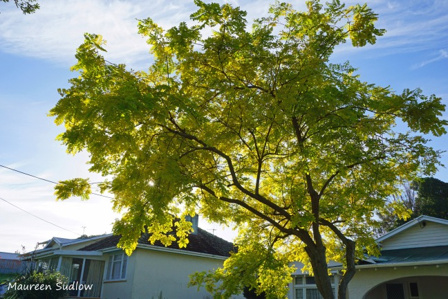 blue-day-tree