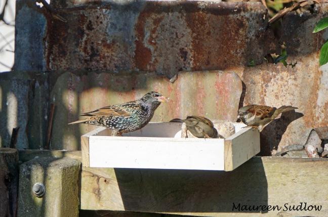 winter birds3