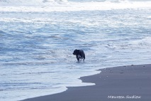 beach boy 4