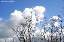 spring wind 4