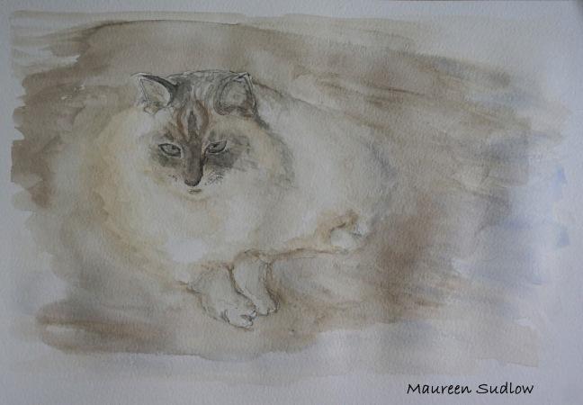 Cairns cat