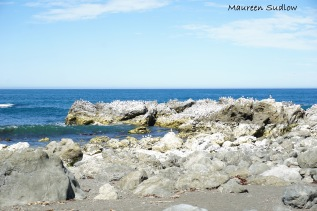 Kaikoura Coast 9