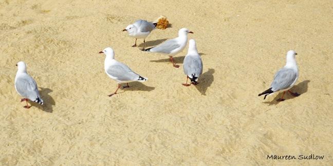 Kaiteriteri Beach 6