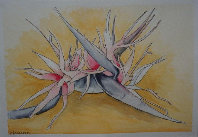 Strelitzia nicolai 2