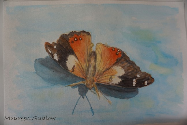 yellow admiral