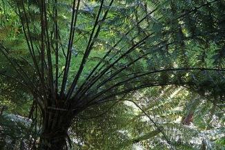 nz bush 3